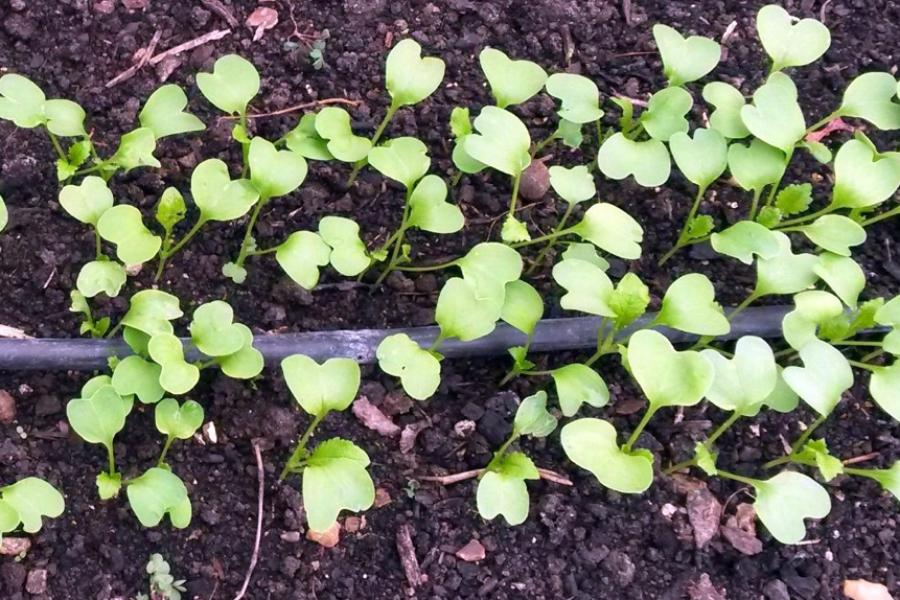 Stage Production de légumes précoces et protection des cultures : les 3 et 4 mars 2018